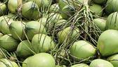 """Giá trái cây rẻ """"giật mình"""": dừa xiêm 60.000 đồng/chục, nhãn lồng 7.000-8.000 đồng/kg"""