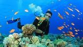 Tăng thêm diện tích khu bảo tồn biển Việt Nam