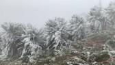 Nhiều nơi ở Việt Nam sắp có tuyết rơi, băng giá