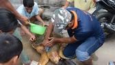 Đội cứu hộ đã giải cứu thành công con rùa biển đưa về biển an toàn.