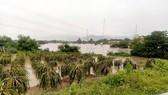 Bình Thuận: Mưa lũ gây ngập trên 100 căn nhà