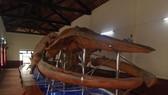 Bộ xương cá voi lớn nhất Đông Nam Á.