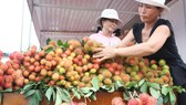 Rambutan price has increased to a record high in the  Mekong Delta (Photo: SGGP)