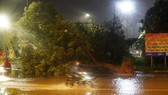 Strong winds uproot trees in Quy Nhon city, Binh Dinh province (Photo: SGGP)