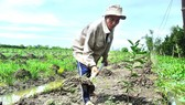 Farmers have to grow new crops from scratch