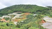 Greenhouses spotted all over forest lands in Lam Dong