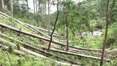 Forests assigned to a company in Lam Dong got cut down