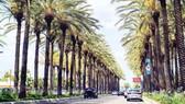 Một đường phố của Thành phố Houston