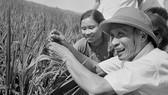 Thủ tướng Phạm Văn Đồng thị sát ruộng lúa năng suất cao của nhân dân xã Hải Anh, huyện Hải Châu, tỉnh Nam Hà tháng 6-1969. Ảnh: Đức Như/TTXVN
