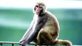 Khỉ bắt cóc trẻ em