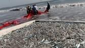 FAO hỗ trợ chống đánh bắt cá trái phép tại Trung Mỹ