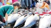 Xuất khẩu hải sản sang EU giảm do thẻ vàng