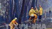Lực lượng cứu hỏa nỗ lực dập lửa cháy rừng tại Dargan, Australia. Ảnh: AFP/ TTXVN