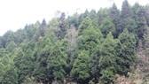 Tô màu xanh cho núi rừng