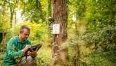 Giám sát rừng bằng IoT