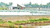Người dân huyện biên giới Tân Hưng nuôi tôm thẻ  trong vùng nước ngọt