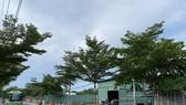 Mặt tiền đường Nguyễn Văn Tạo, từ cầu Hiệp Phước đến cầu Kênh Lộ,  hầu hết là nhà tạm, mái tôn vách tôn