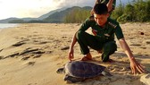 Thả cá thể rùa biển quý hiếm về lại môi trường tự nhiên