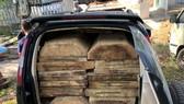 Cơ quan chức năng tỉnh Thừa Thiên - Huế tiến hành tịch thu phương tiện và toàn bộ số gỗ lậu. 