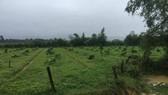 Hàng trăm gốc cây bưởi Phúc Trạch bị chặt hạ không thương tiếc
