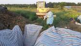 Cơ quan chức năng ở tỉnh Hà Tĩnh tiến hành xử lý, tiêu hủy số heo bị dịch