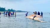 Xác cá voi trôi dạt vào bờ biển