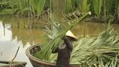 Rừng dừa nước sắp bị chặt bỏ 50ha để làm hồ chứa nước Thái Cân. Ảnh NGUYỄN TRANG