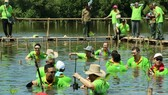 Các đại biểu tham gia trồng cây tại rừng ngập mặn Nam Jakarta, Indonesia. (Ảnh: VIETNAM+)