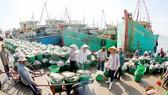 Cá đánh bắt từ biển cập bến cảng Long Hải tỉnh Bà Rịa - Vũng Tàu Ảnh: THÀNH TRÍ