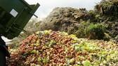 Báo động nạn lãng phí thực phẩm