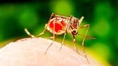 Tỷ phú Bill Gates kêu gọi phòng chống bệnh sốt rét