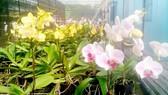 Hoa lan TPHCM được xúc tiến thương mại tại Cần Thơ