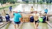 Thu hoạch cá tra tại ĐBSCL Ảnh: CAO PHONG