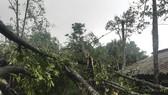 Cây cối đổ ngổn ngang sau trận lốc xoáy trước đó ở Hà Tĩnh