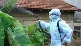 Đà Nẵng: Nguy cơ bùng phát dịch sốt xuất huyết