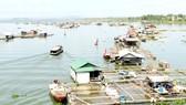 Vùng đầu nguồn lòng hồ Trị An đang là nơi mưu sinh của người dân nuôi cá lồng bè.  Ảnh: VĂN PHONG
