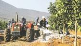 Một nông trại tại Limpopo, Nam Phi