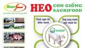 SAGRIFOOD – Nơi cung cấp heo con giống và giải pháp chăn nuôi an toàn