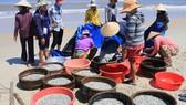 Cá cơm được thương lái mua tại bến để làm nước mắm và phơi khô