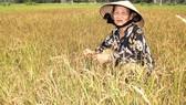 Lúa đông xuân của người dân thôn Thuận Hạnh chết cháy  vì thiếu nước