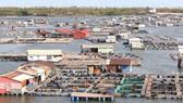 Lồng bè nuôi trồng thủy sản dày đặc trên sông Chà Và