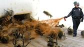 Lời cảnh báo từ ong