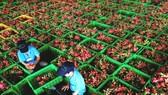 Doanh nghiệp được tự chứng nhận xuất xứ hàng hóa khi xuất khẩu vào EU