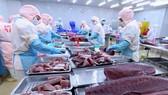 Chế biến sản phẩm cá ngừ đại dương xuất khẩu tại nhà máy của Công ty Cổ phần Bá Hải (Phú Yên). Ảnh: TTXVN