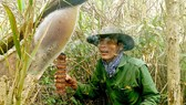 Gác kèo ong mật ở rừng U Minh Hạ. Ảnh: TẤN THÁI