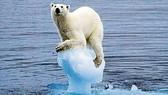 Biến đổi khí hậu được cho là nguyên nhân chính khiến băng không ngừng tan ở Bắc Cực