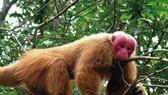 Thả về môi trường 3 cá thể động vật quý hiếm