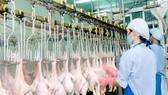 Bình Phước: Xây dựng chuỗi sản xuất gà an toàn phục vụ xuất khẩu