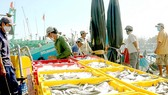 Nghề khai thác hải sản ở Bình Thuận vẫn cơ bản ổn định