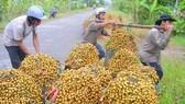 Hỗ trợ người dân tiêu thụ nông sản